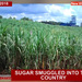 How smuggled sugar is killing Uganda's industry