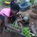Teach kids to grow their own food