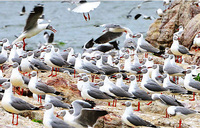 Starved fishermen turning to bird eggs