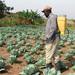 African farmers to control a $1 trillion Food Market - Report