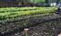 NFA to plant over 37 million tree seedlings