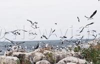 Floods destroy largest breeding ground for birds