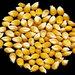 NaCCRI to set up indigenous seed banks