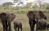 Zimbabwe says 12 young elephants died from bacterial infection