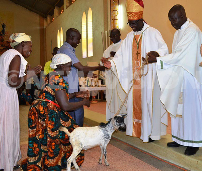 ebbi iocese ishop t ev ino anctus anok receiving goats from hristians during his farewell mass on hursday ope rancis has transferred anok to ira hoto by eneict kethwengu