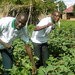 Teso farmers tipped of growing vegetables