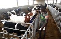 Why you need a proper calf house