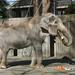 Most beloved elephant in Japan' dies, aged 69