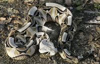 Snake bites cause 30,000 deaths annually in Africa