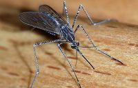 GSK aims to market world''s first malaria vaccine