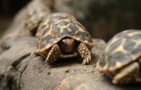 Hundreds of tortoises found in luggage at Thai airport