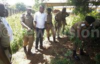 Marijuana grown on gov't land in Entebbe
