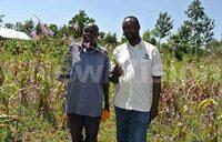 Scientists battle striga (witchweed) in Uganda