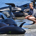 Fresh whale stranding on notorious New Zealand beach