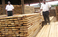 Timber auction for closed bidding