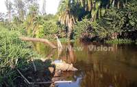 NEMA to issue stringent measures against wetland destroyers