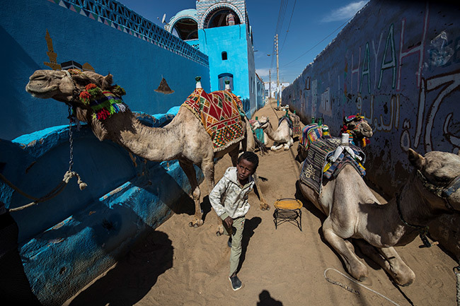 ubian boys lead camels along an alley in the village of harb uhail near swan in pper gypt some 920 kilometres south of the capital airo on ebruary 5 2020 hoto by haled