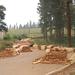 NFA deployment fails to halt logging, charcoal burning in Kyenjojo