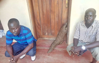 Two S. Sudan security officials arrested over sale pangolin