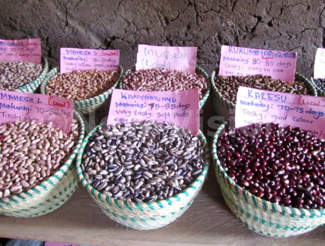 ugishas bean varieties