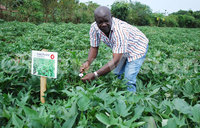 Tackling rural poverty through climate smart agriculture