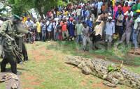 Six-man-killer crocodile captured in Jinja