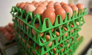 Eggs 350x210