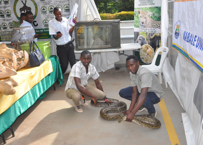 utegensi and usoke holding the python for the public to see