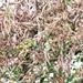 UPDF battles second wave of desert locusts in Moroto