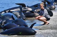 Fresh whale stranding on notorious New Zealand beach