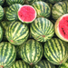Melons: Use preventative spray to control pests and diseases