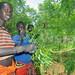 Karamojong resort to Neem plant to treat malaria