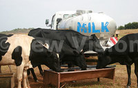 'Increased milk production with low consumption'