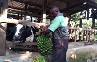 COVID-19 lockdown: Farmers count losses