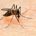 No women's Zika vaccine likely before 2020 - WHO