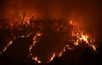 The forest fires that have killed over 60 people