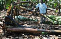 Hailstorm ravages Kiruhura gardens