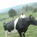 Muhoozi banks on mixed farming for prosperity