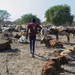 Money, guns and brides fuel South Sudan's cattle wars