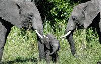 Italy boosts Uganda's anti-poaching drive