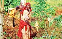 Small holder farmers are the solution to poverty — UN