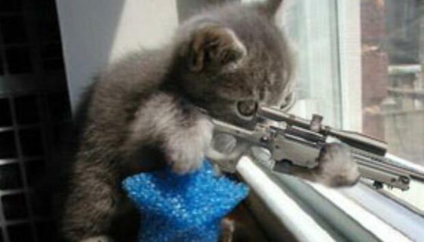sniper-kitty