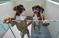 South Korea's dog cloning clinic