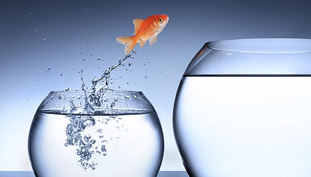 goldfishjumpingsuccesspromotion100622543orig