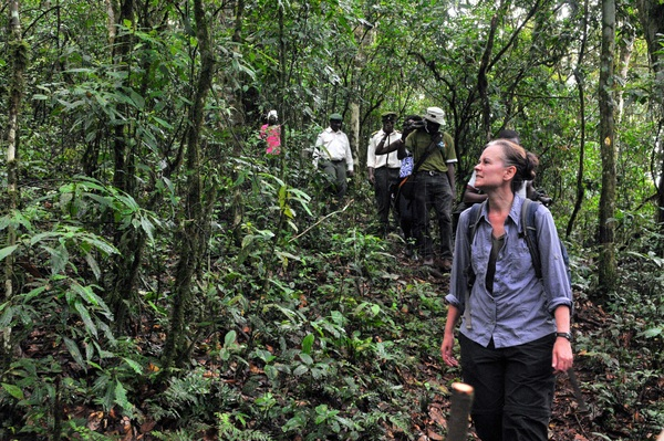 Gorilla trekking in Bwindi forest