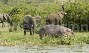 Elephants 350x210