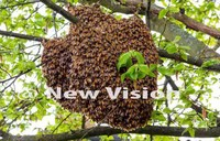Bees sting social worker to death