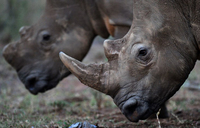 Poaching steals from all of us