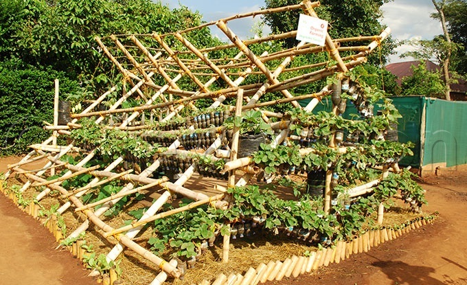 vegetables like onions strawberries among others can be grown any where in a home