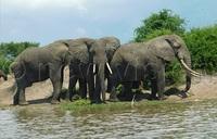 Uganda's wildlife recovering